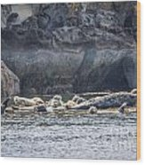 Harbour Seals Resting Wood Print