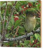 Hardly The Least Least Flycatcher Wood Print