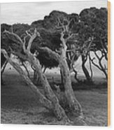 Hardy Wood Print
