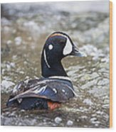Harlequin Duck In Rapids Wood Print