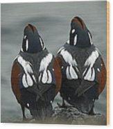 Harlequin Ducks Wood Print