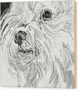 Harley The Maltese Wood Print