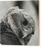 Harpy Eagle Closeup Wood Print