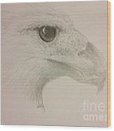 Harpy Eagle Study Wood Print by K Simmons Luna