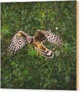 Harrier Hunt Wood Print