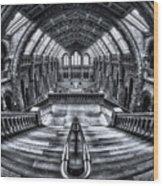 Harry Potter Meets Escher And Darwin. Wood Print