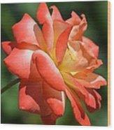 Harvest Rose Wood Print