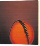 Harvest Sunset - Fs000416 Wood Print by Daniel Dempster