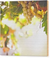 Harvest Time. Sunny Grapes I Wood Print