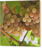 Harvest Time. Sunny Grapes II Wood Print by Jenny Rainbow