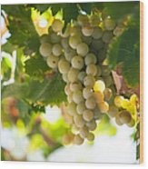 Harvest Time. Sunny Grapes Iv Wood Print