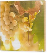 Harvest Time. Sunny Grapes Vi Wood Print by Jenny Rainbow