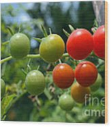 Harvest Tomatoes Wood Print