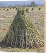 Harvested Sesame Crop Wood Print