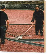 Harvesting Cranberries Wood Print