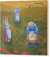 Harvesting Poppies In Tuscany Wood Print