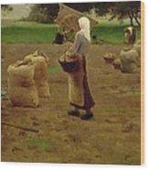 Harvesting Potatoes Oil On Canvas Wood Print
