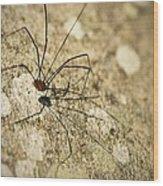 Harvestman Spider Wood Print
