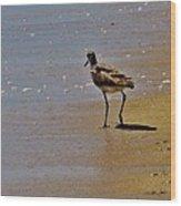 Hatteras Island Bird 8/24 Wood Print