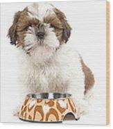 Havanese With Dog Bowl Wood Print