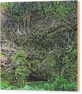 Hawaii Fern Grotto Wood Print