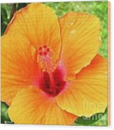 Hawaii Orange Hibiscus Wood Print