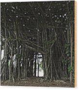 Hawaiian Banyan Tree - Hilo City Wood Print
