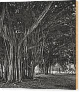 Hawaiian Banyan Tree Root Study Wood Print by Daniel Hagerman