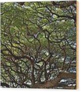 Hawaiian Banyan Tree Wood Print