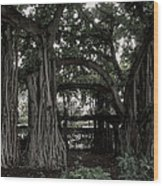 Hawaiian Banyan Trees Wood Print by Daniel Hagerman