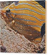 Hawaiian Butterfly Fish Wood Print