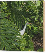 Hawaiian Garden Visitor - A Bright White Egret In The Lush Greenery Wood Print