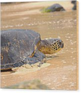 Hawaiian Green Sea Turtle 2 Wood Print