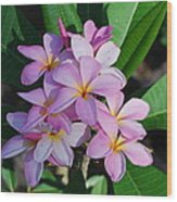 Hawaiian Lei Flower Wood Print