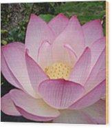 Hawaiian Lotus Wood Print