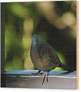 Hawaiian Mourning Dove Wood Print