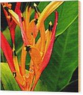 Hawaiian Parakeet Heliconia Wood Print