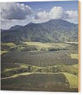 Hawaiian Pineapple Fields Wood Print