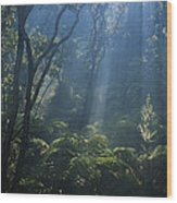Hawaiian Rainforest Wood Print