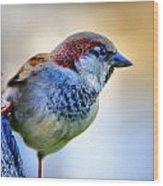 Hawaiian Sparrow Wood Print