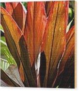 Hawaiian Ti Plant Wood Print