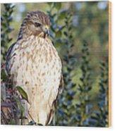 Hawk 002 Wood Print
