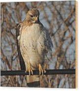 Hawk #21 Wood Print