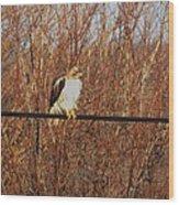 Hawk #22 Wood Print