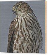 Hawk Beauty On The Lookout Wood Print