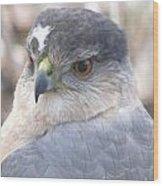 Hawk Eye 13528-3 Wood Print