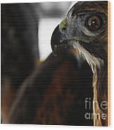Hawk Eye Wood Print by Steven  Digman