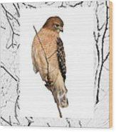 Hawk Framed In Branch Outline Wood Print