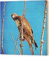 Hawk In A Glow Wood Print