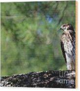 Hawk In Tree Wood Print